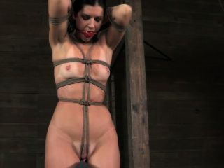 Over branch tied India Summer tit anguish